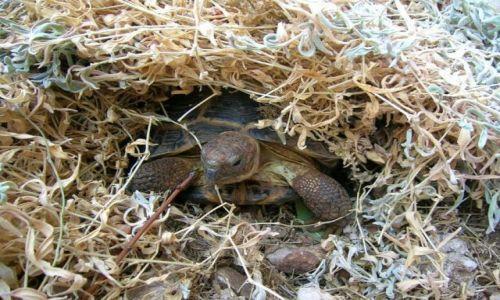 Zdjecie CHORWACJA / Dalmacja / Dawno temu w trawie / Przyczajony żółwik, ukryty smok