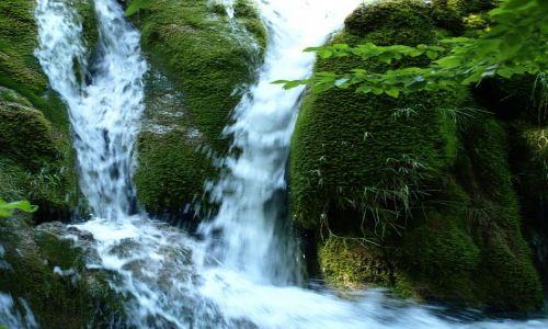 Zdjecie CHORWACJA / Plitvice / ... / roślinki i woda