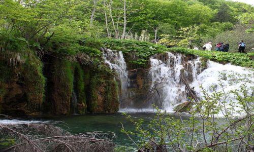 Zdjecie CHORWACJA / Park narodowy Plitwice / Kompleks Jezior Plitwickich / Park Narodowy Jezior Plitwickich