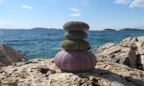 Zdjecie CHORWACJA / Dalmacja / wyspa Murter / Szkieleciki