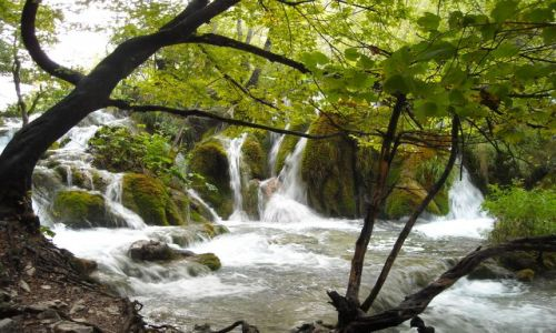 Zdjecie CHORWACJA / Góry Dynarskie / Park Narodowy / Plitvickie Jeziora