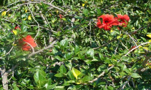 Zdjęcie CHORWACJA / Wyspa Hwar / blisko brzegu.. / taki sobie..
