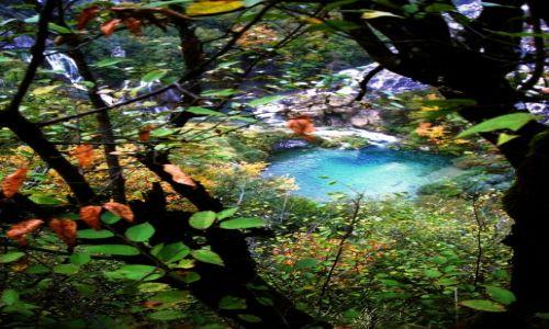 Zdjecie CHORWACJA / - / Plitvicke Jeziora / wypatrzone  wśród listowia