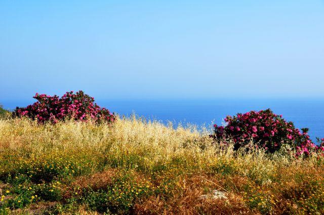 Zdjęcia: Amathous, Śródziemnomorskie klimaty, CYPR