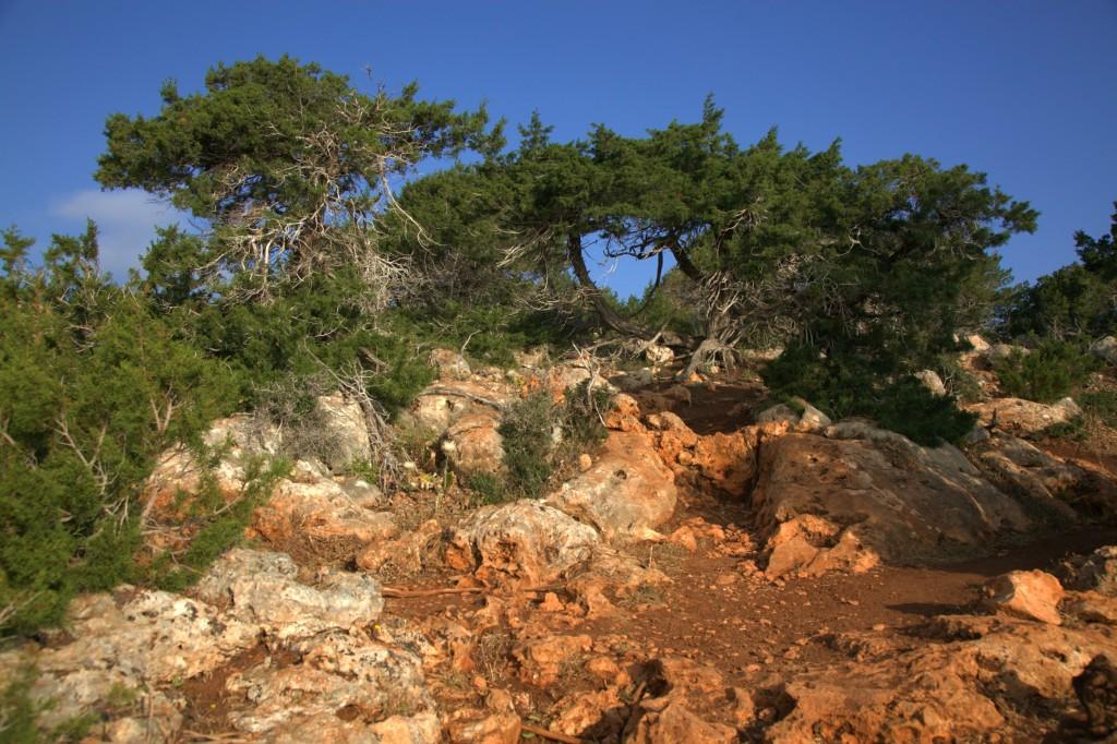 Zdjęcia: Półwysep Akamas, Polis Chrysochous, Barwy i formy, CYPR
