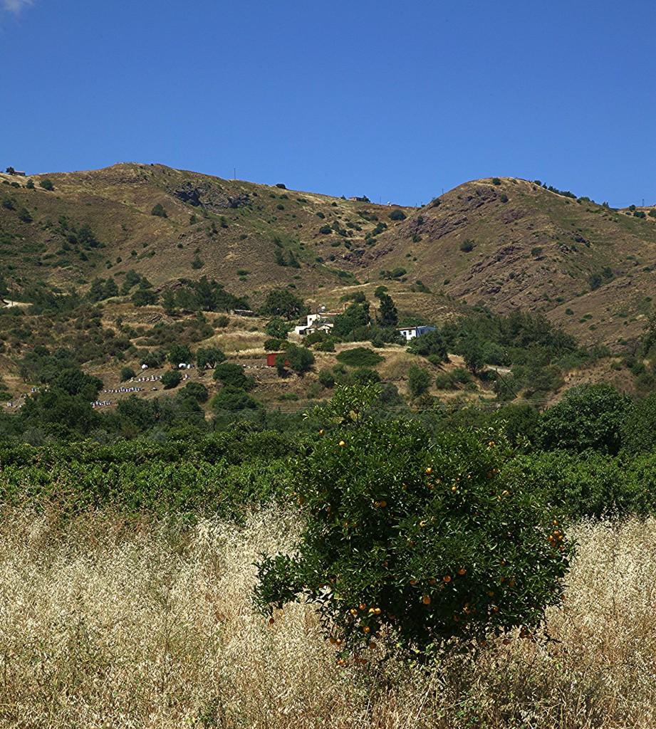 Zdjęcia: Kato Pyrgos, Tylliria, Drzewko, CYPR
