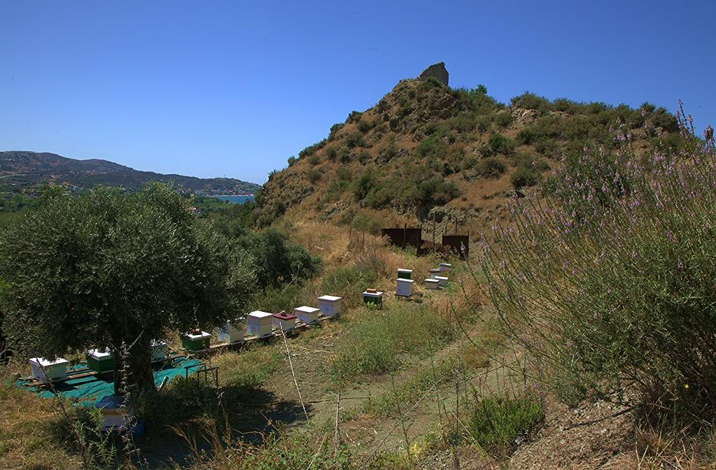 Zdjęcia: Kato Pyrgos, Tylliria, Pasieka z widokiem na grodzisko, CYPR