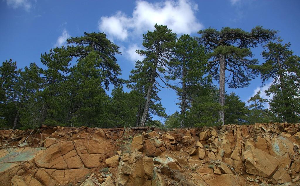 Zdjęcia: Góry Troodos, Nikozja, Zycie na skale, CYPR
