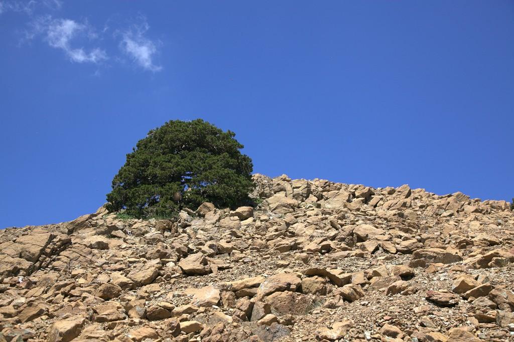 Zdjęcia: Góry Troodos, Nikozja, Życie na skale, CYPR