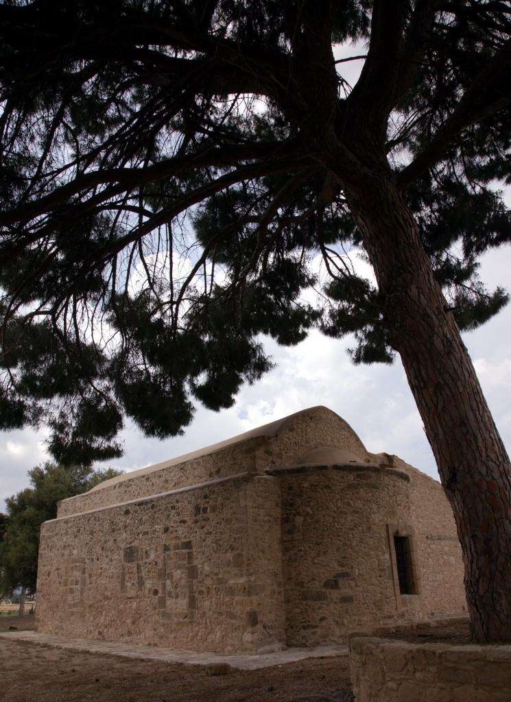 Zdjęcia: Kościół Agios Andronikos, Polis Chrysochous, W cieniu sosny, CYPR