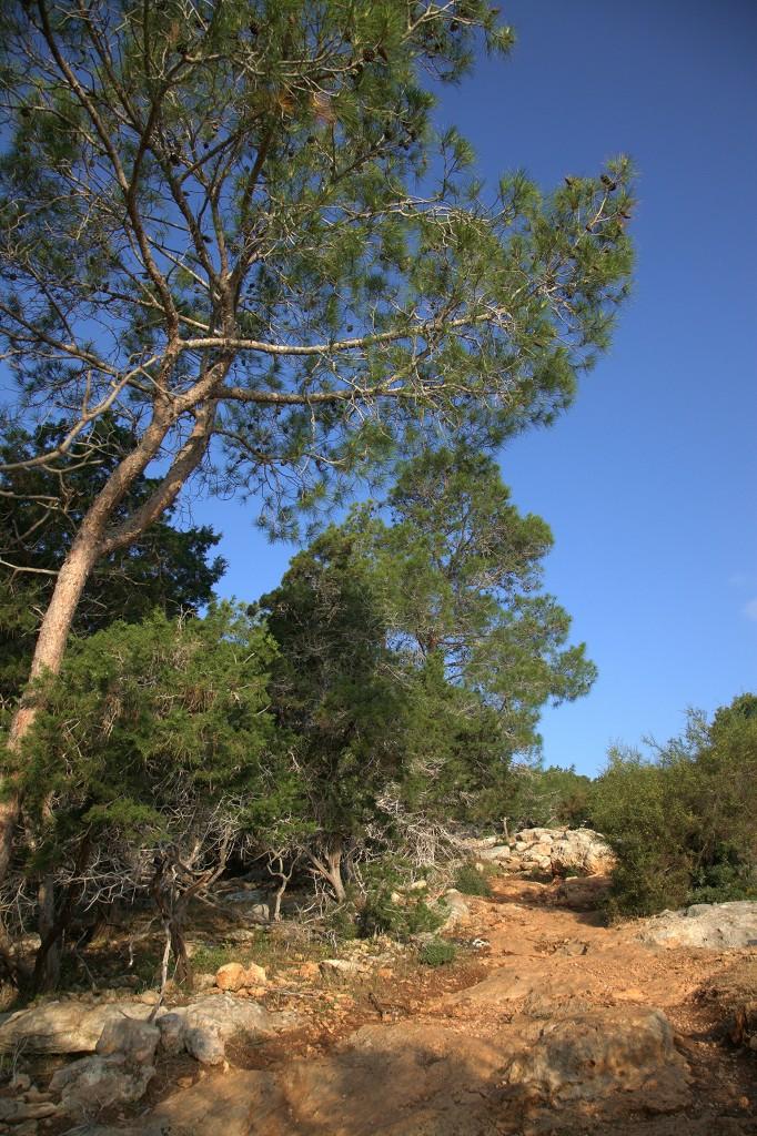Zdjęcia: Półwysep Akamas,  Polis Chrysochous , Na szlaku Adonisa, CYPR