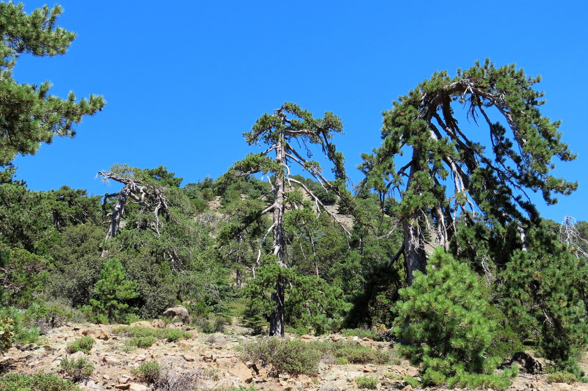Zdjęcia: Troodos, Góry Troodos, CYPR