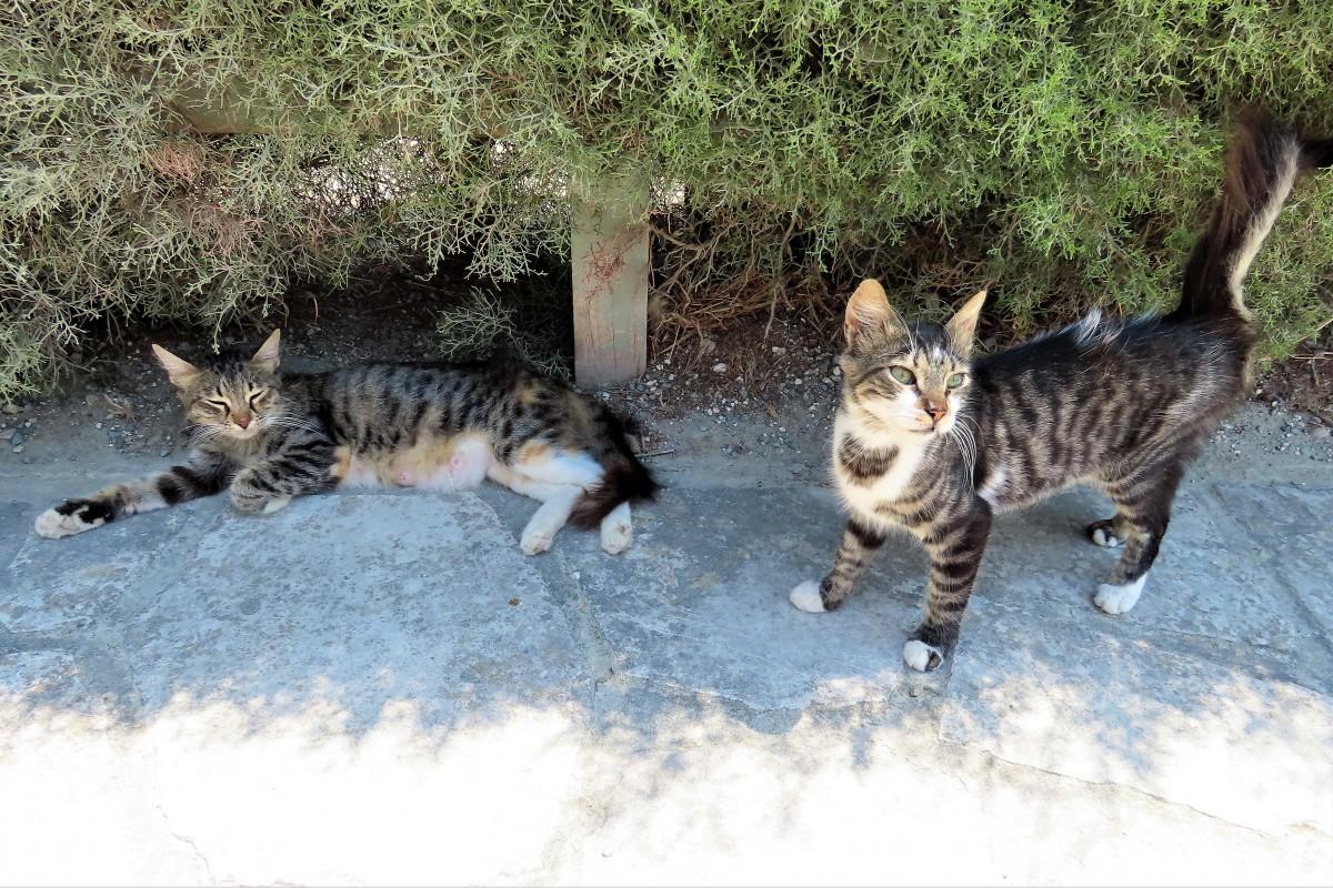 Zdjęcia: Larnaca, Wszędzie rządzą koty, CYPR