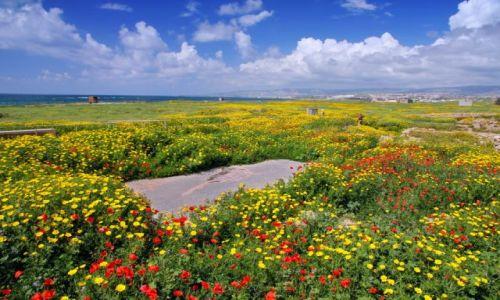 Zdjęcie CYPR / - / Pafos / dywan kwiatów