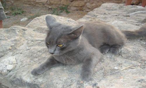 Zdjecie CYPR / Pafos / Pafos / Dla wielbicieli kotów