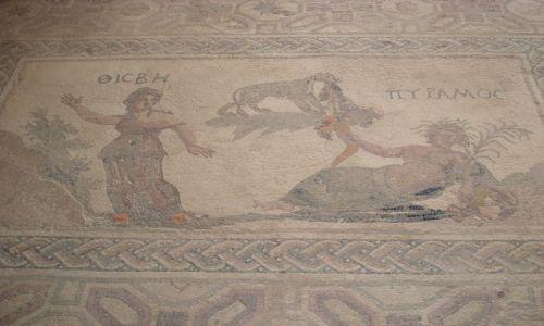 CYPR / Pafos / Pafos / Mozaiki z Domu Dionizosa