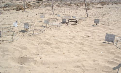 Zdjecie CYPR / Pafos / Zatoka Lara / półwysep Akamas / Klatki do ochrony żółwi