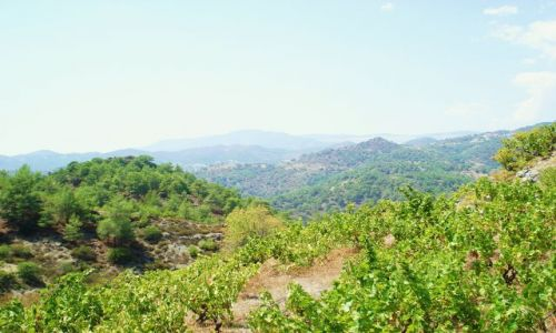 CYPR / Troodos / Troodos / Krajobraz cypryjski
