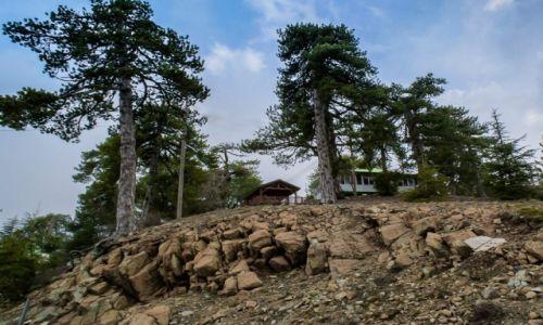 Zdjęcie CYPR / Trodos / Cypr / w górach
