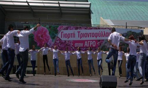 CYPR / Pitsilia / Agros / Taniec kwiatów