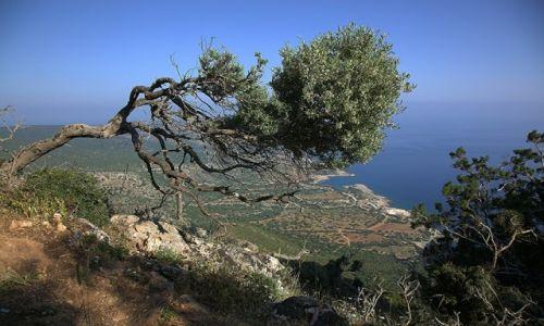 Zdjecie CYPR / Polis Chrysochous / Akamas / O świcie