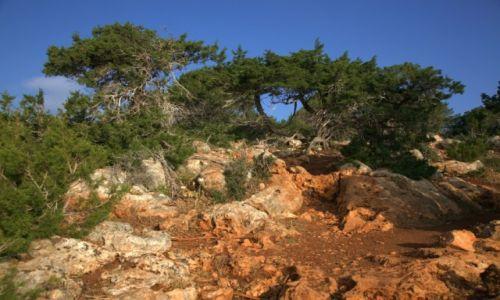 Zdjęcie CYPR / Polis Chrysochous / Półwysep Akamas / Barwy i formy