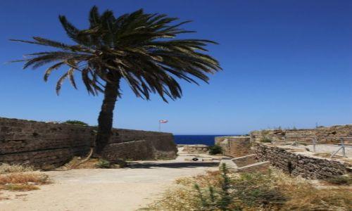Zdjęcie CYPR / Kyrenia  / Zamek / Palma na gruzach