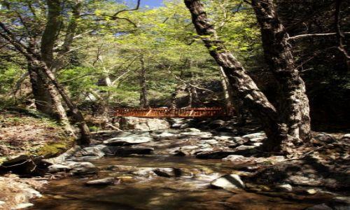 Zdjęcie CYPR / Góry Troodos / Rzeka Kryos Potamos / Mostek