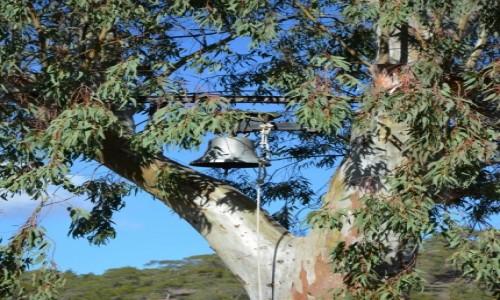 Zdjecie CYPR / Cześć grecka Cypru / Góry Troodos / Dzwonnica :-)
