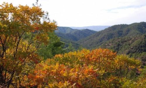 Zdjecie CYPR / Góry Troodos / gdzieś po drodze / W górach Troodos