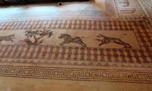 Zdjecie CYPR / - / Pafos / Mozaiki