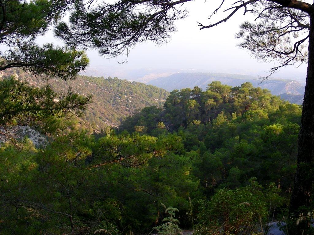 Zdjęcia: okolice Girne, Kyrenia, Lasy piniowe, CYPR PÓŁNOCNY