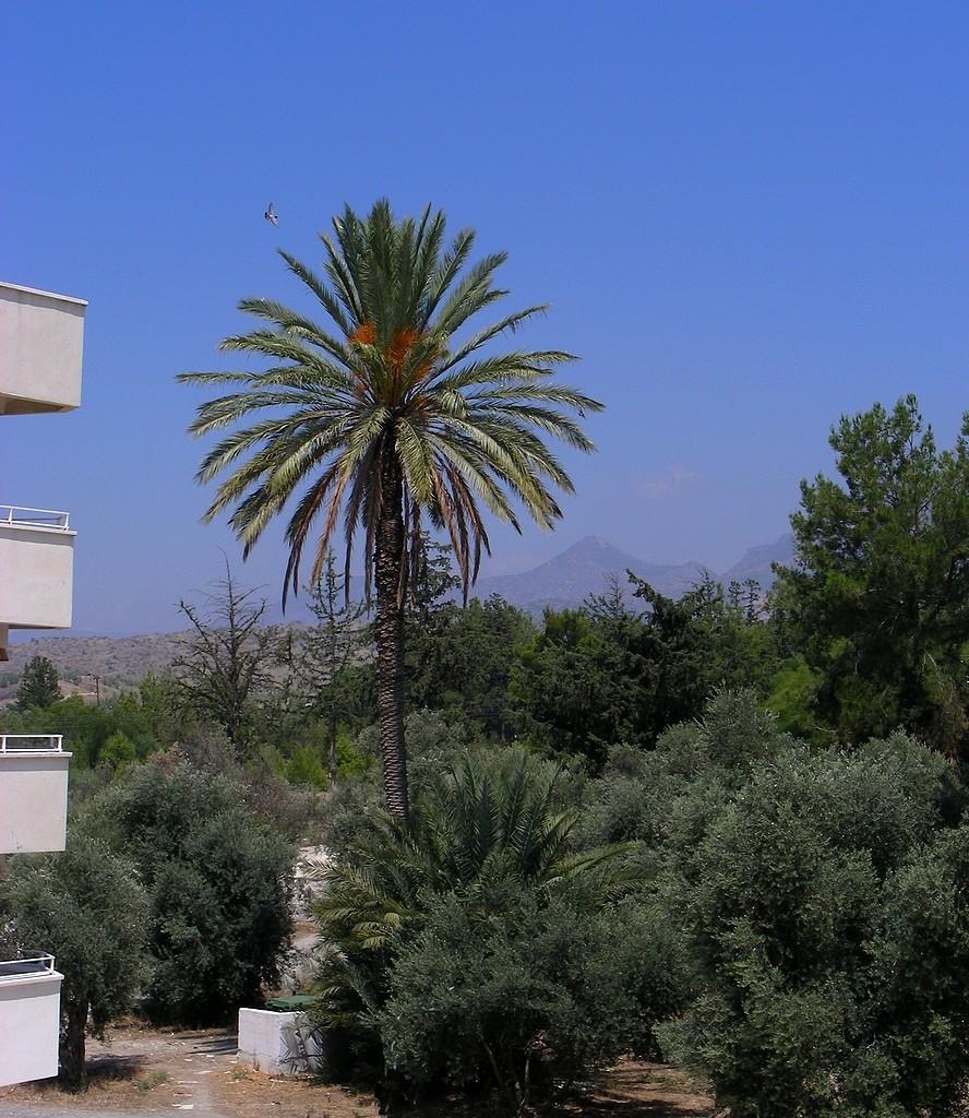 Zdjęcia: Okolice Nikozji, Nikozja, Cypryjski park osiedlowy, CYPR PÓŁNOCNY