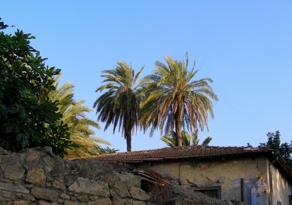 Zdjęcia: Girne, Kyrenia, Palmy i figi nad dachami, CYPR PÓŁNOCNY