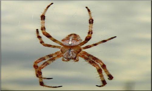 Zdjęcie CYPR PÓŁNOCNY / Kyrenia / Pustelnia w dolinie. / Cypryjski pająk