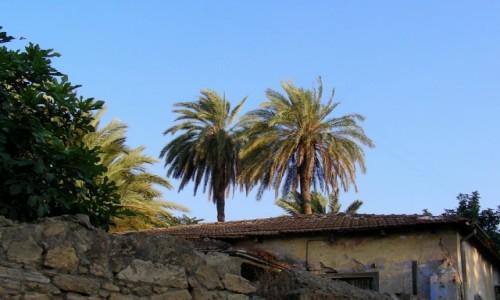 Zdjecie CYPR PÓŁNOCNY / Kyrenia / Girne / Palmy i figi nad dachami