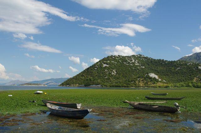 Zdjęcia: jezioro Shkoder, nad jeziorem Shkoder, CZARNOGÓRA
