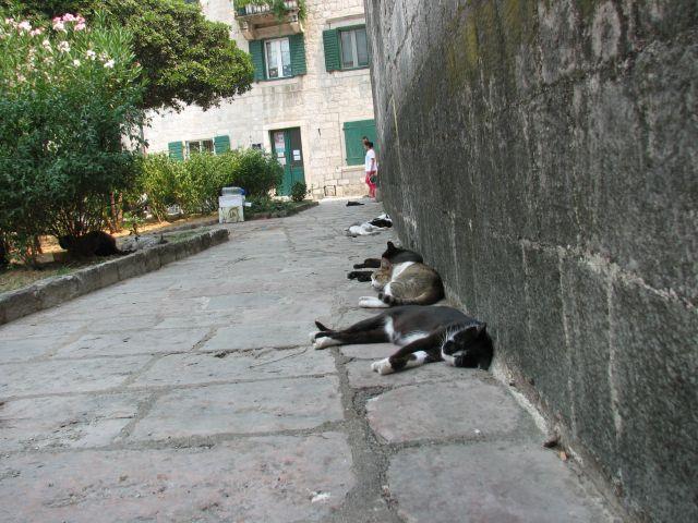 Zdjęcia: Montenegro, Koty w mieście Kotor , CZARNOGÓRA