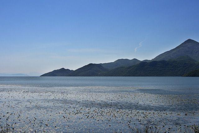 Zdjęcia: Jezioro Szkoderskie, Jezioro Szkoderskie, CZARNOGÓRA