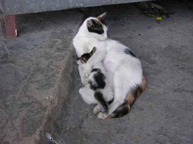Zdjęcia: Budva, Kocia mama, CZARNOGÓRA