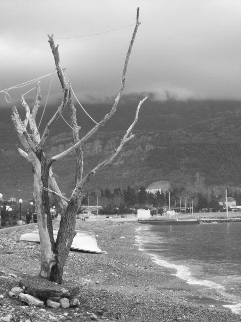 Zdjęcia: Budva, Czarnogóra, drzewko, CZARNOGÓRA