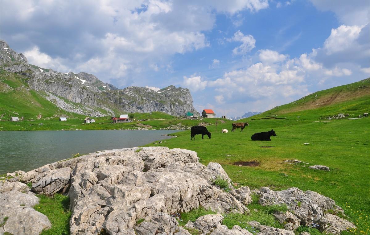 Zdjęcia: Morača, Kolasin, Nad jeziorem Kapetanovo, CZARNOGÓRA