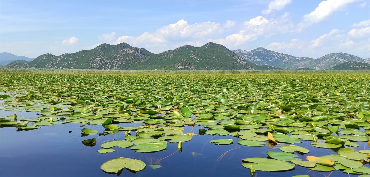 Zdjęcia: Jezioro Szkoderskie, Podgorica, Jezioro Szkoderskie, CZARNOGÓRA