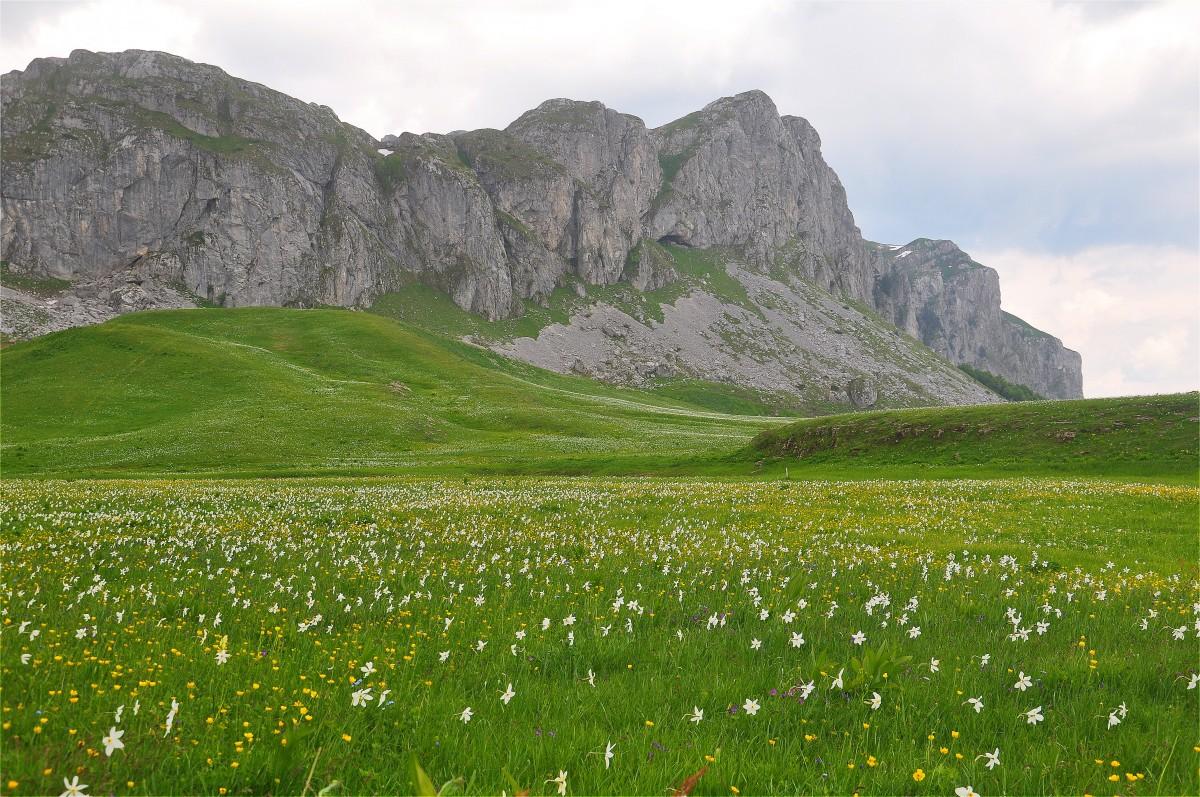Zdjęcia: Moračke planine, Kolasin, Góry Dynarskie w Czarnogórze, CZARNOGÓRA