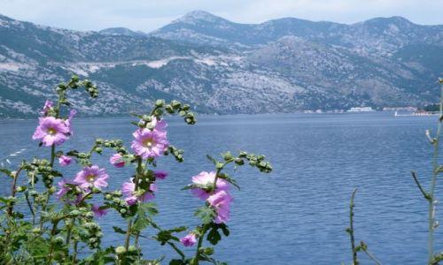 Zdjecie CZARNOGÓRA / Riwiera Kotorska / Gdzieś nad morzem / Takie same jak w moim ogrodzie:)