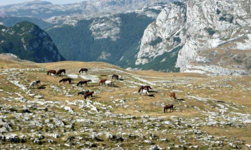 Zdjecie CZARNOGÓRA / Czarnogóra (Montenegro) / Park Narodowy Durmitor / Skały Durmitoru, Czarnogóra