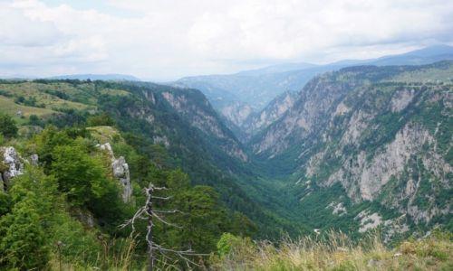 Zdjecie CZARNOGÓRA / Czarnogóra / Durmitor / Park Narodowy Durmitor Kanion