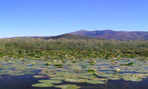 Zdjęcie CZARNOGÓRA / jezioro szkoderskie / jezioro / szkoderskie