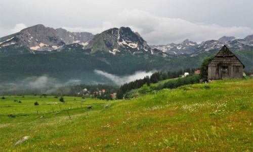 Zdjecie CZARNOGÓRA / - / okolice Zabljaka / u podnóża Durmitoru...