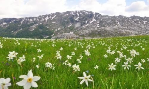 Zdjecie CZARNOGÓRA / Kolasin / Morača / Uroki Czarnogóry
